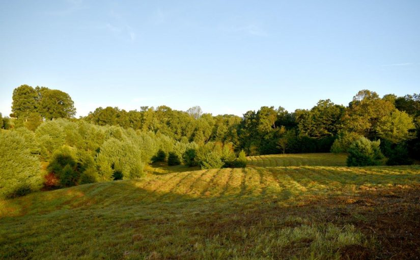 For Sale: 11.96 Acres on Country Ridge Road