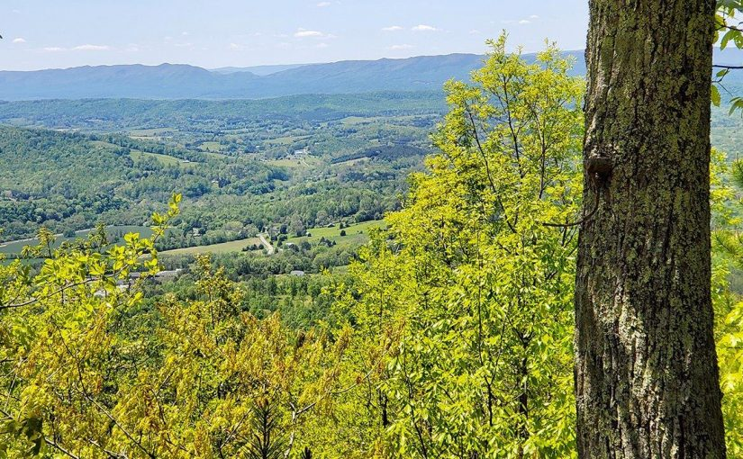 Sealed Bid Real Estate Auction: 2,057± Acres of Timberland on Purgatory Mountain