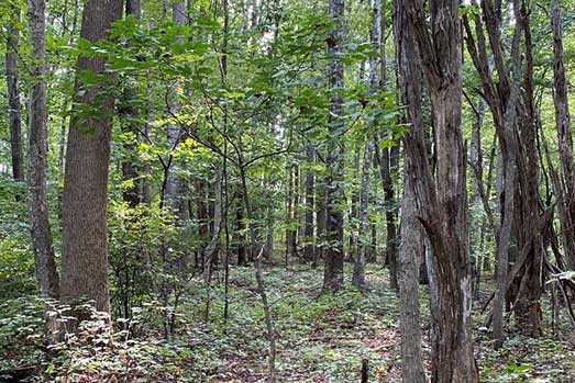For Sale: 27.99 Acres – Located Just Outside of Troutville