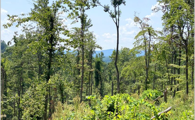 SOLD – For Sale: 91± Acres
